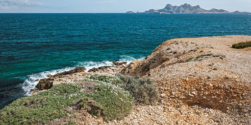 Les plantes protégées du littoral du Parc National des Calanques