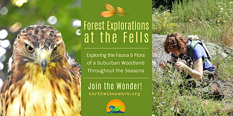 Summer Forest Explorations tickets
