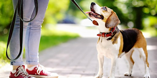 Walkies with your pooch