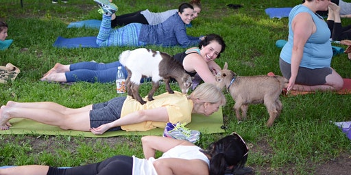 FIRST GOAT YOGA OF THE YEAR! - Saturday 5/2 | 8:30am - 9:30am |