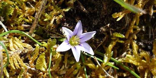 Mother Nature; Wildflower Botany and Folklore Walk