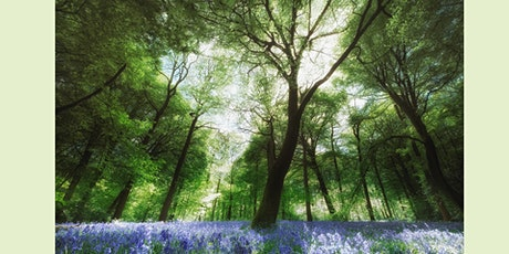 Mindful Photography Bluebell Workshop tickets