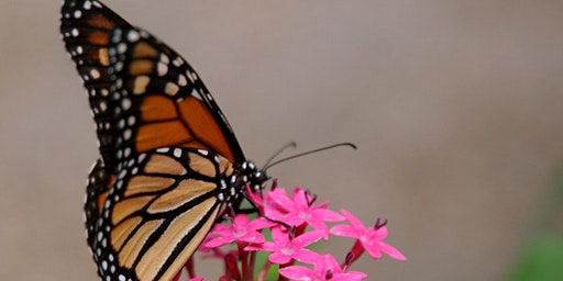 Butterfly Friends in Your Garden  - Saturday 2/29 - 9:45 am - at the PLANT FESTIVAL TODAY!!!