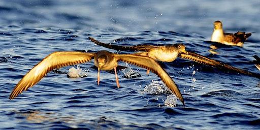 Découverte des oiseaux marins des Calanques
