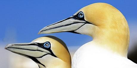 Observer & Connaître : Les oiseaux marins des Calanques tickets