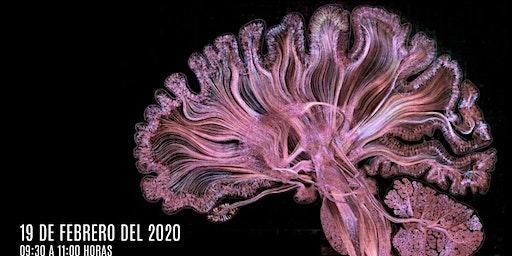 Neuroética: Relaciones entre mente/cerebro y moral/ética