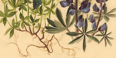 Painting Botanicals : Natural Science Series tickets