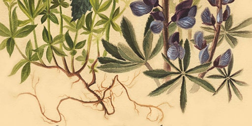 Painting Botanicals : Natural Science Series