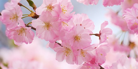 Cherry Blossom Tea Ceremony at Tea house in NYC tickets
