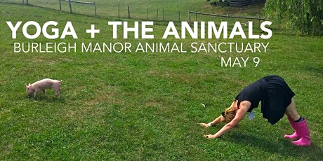 Yoga + The Animals tickets