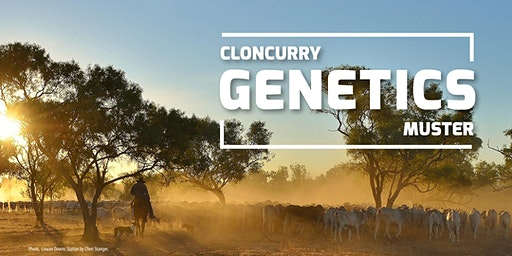 """Genetics Muster"" Cloncurry, NWQ"