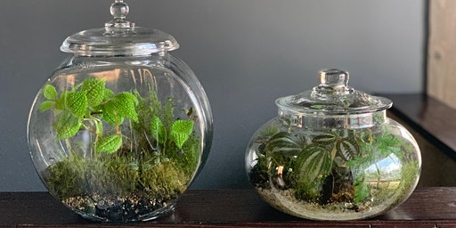 Terrariums with Jodi! March 2020