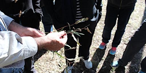 Introduction to Bushcare Workshop