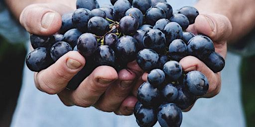 Wine Tasting on Wednesday