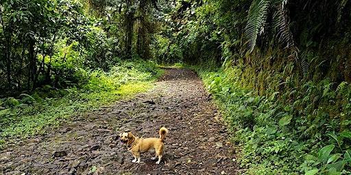 HIKING CONCASA (Locos por el bosque)