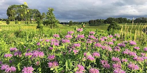 County Grounds Park / Sanctuary Woods - Botany Walk
