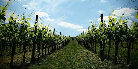 Degustazione vini di montagna Vigna di More da Galleria Trifoglio Arte biglietti