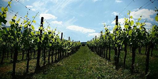 Degustazione vini di montagna Vigna di More da Galleria Trifoglio Arte