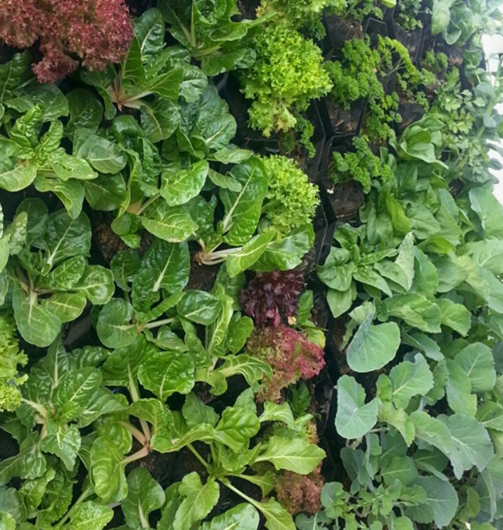 Introduction to Vertical Gardening image