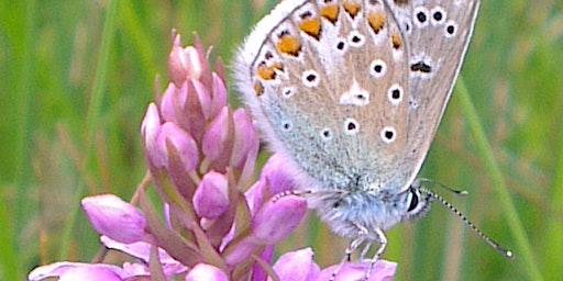 Birds, Butterflies & Wildflowers of Higher Poynton