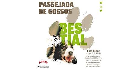 Passejada de Gossos Bestial 2020 (Diumenge 8 de març) entradas