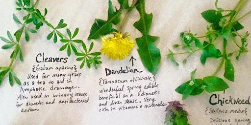 Spring Herbal Remedies
