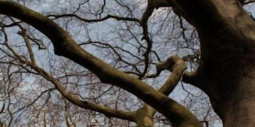Winter Tree ID at Redgrave & Lopham Fen (EWC 2806)