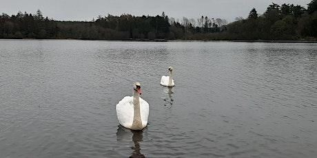 Wild Women Wellbeing - Midweek Wander - Hillsborough Lake  tickets