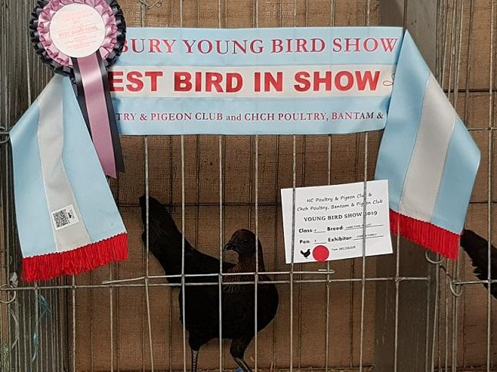 Young Bird Show & Education Day 2020 image