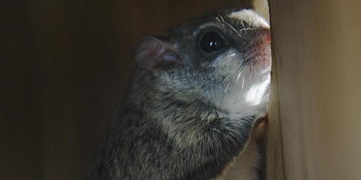 County Grounds Park / Sanctuary Woods - Mammals Tour