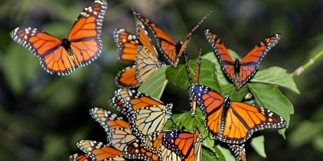 County Grounds Park - Monarch Tour tickets