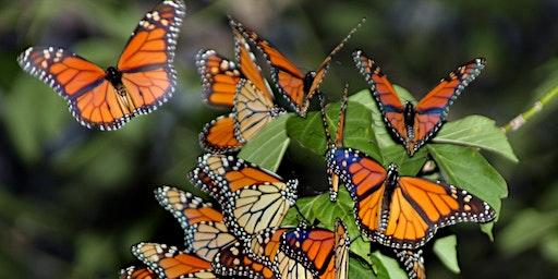 County Grounds Park - Monarch Tour