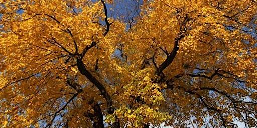 County Grounds Park / Sanctuary Woods - Fall Colors Tour