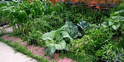 Barter Based Session: And Again! Introdution to Natural Gardening