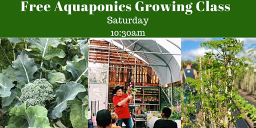FREE AQUAPONICS GROWING CLASS