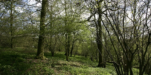 EXCLUSIVE Friends of the Forest Event - Guided Walk with Head Forester Stephen