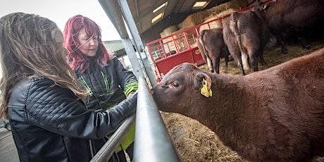 Meet the calves tickets