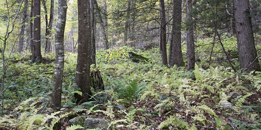 Forest Stewardship Workshop 2020
