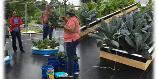 Hydroponic Gardening for the Homeowner