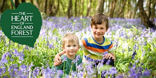 Bluebell Wood Fundraising Open Day - Heart of England Forest