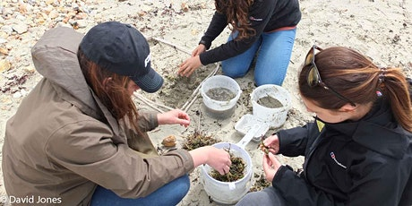 Big Microplastic Survey - Ryde Beach, IOW tickets
