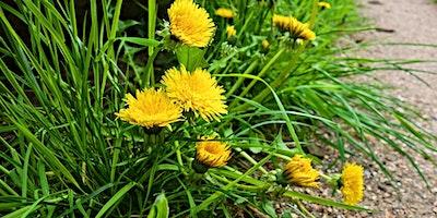 Wildkräuter: Frühjahrskur: Fit in den Frühling