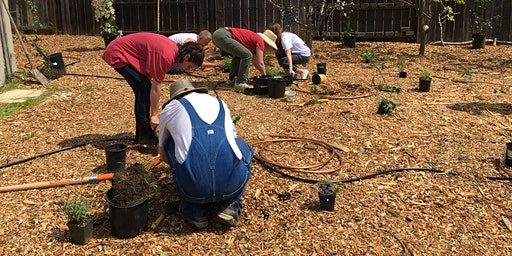 Dixon Demonstration Food Forest Installation Workshop- DAY 2