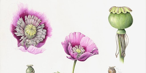 Gallery Opening: Botanical Print Exhibit from Wendy Hollender