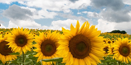 Summer Sunflower Fields tickets