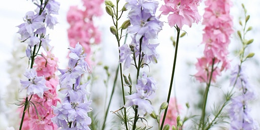 Grow, Blossom and Flourish - grow your own cut flowers workshop, Cheltenham