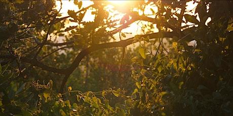 Balade découverte des Calanques : Le Parc des Bruyères billets