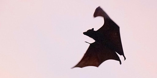 Walking Tour: Bats & Echolocation