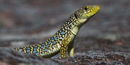 J'ai RDV avec la Biodiversité : les reptiles, amphibiens et insectes
