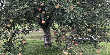 Pruning Mature and Young Apple Trees tickets